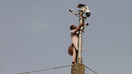 A technician installs a CCTV camera in Peshawar May 20 as part of the Safe City Project. [Syed Ansar Abbas]