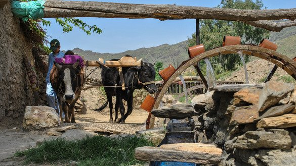A farmer's son in Mohmand Agency uses a centuries-old system to irrigate the family's land May 15. [Alamagir Khan]