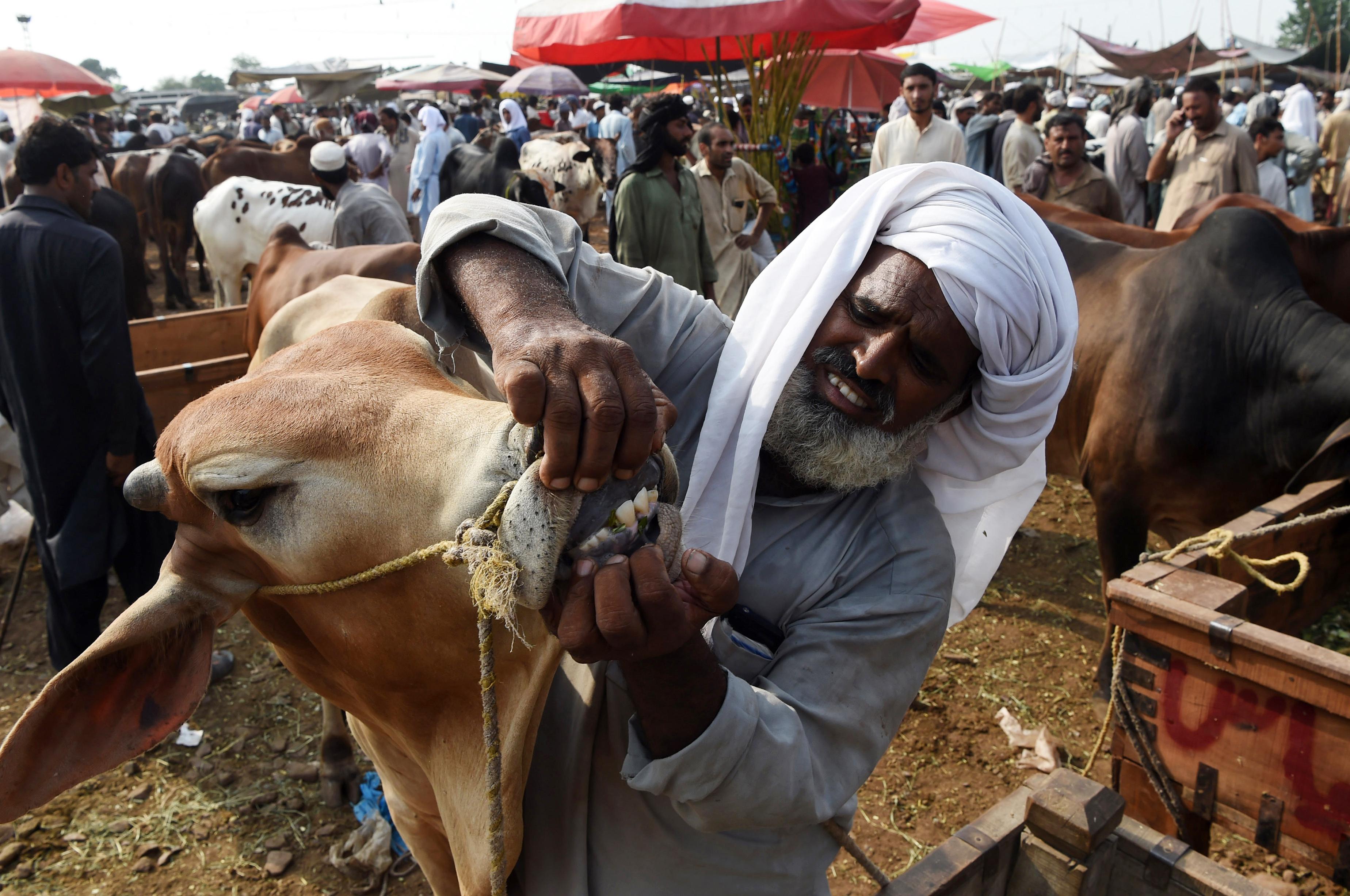 عید الاضحی سے قبل پاکستان کا غیر قانونی عطیات پر کریک ڈاون