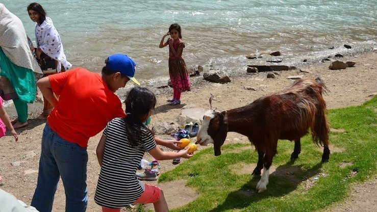 Children feed a goat on the shore of Lake Saiful Muluk. [Qasim Yousafzai]