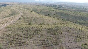 Trees planted on the outskirts of Peshawar are shown in this July aerial view. The KP government is close to plantint a billion trees in fewer than three years to protect the environment. [Courtesy of BTTAP]