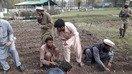 FATA authorities encourage saffron as alternative to growing illegal drugs