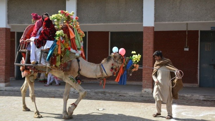Tribal schoolgirls ride a camel during the Mohmand Sports Youth and Cultural Festival February 22. [Alamgir Khan]