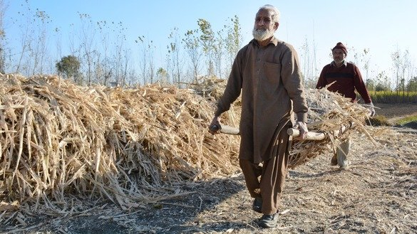 Two farmers in Charsadda District in January carry the remnants of sugarcane crushed by a traditional mill. [Alamgir Khan]