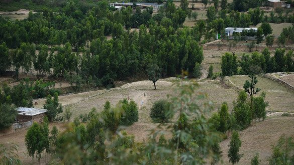 Children play cricket in a tree plantation in Heroshah District May 17. [Farooq Naeem/AFP]