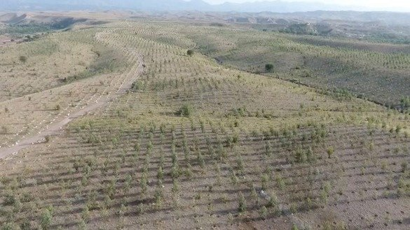 Trees planted on the outskirts of Peshawar are shown in this July 2017 aerial view. [Billion Tree Tsunami Afforestation Project]