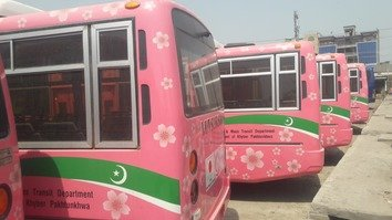 Pink buses are shown in Peshawar August 25. [Muhammad Ahil]